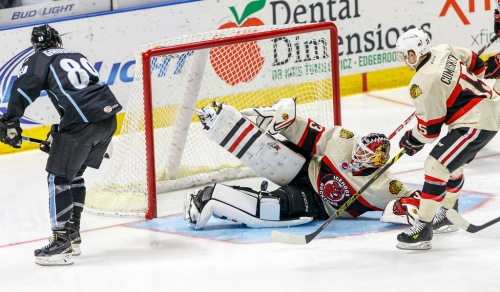 (Photo Credit: Rockford IceHogs)
